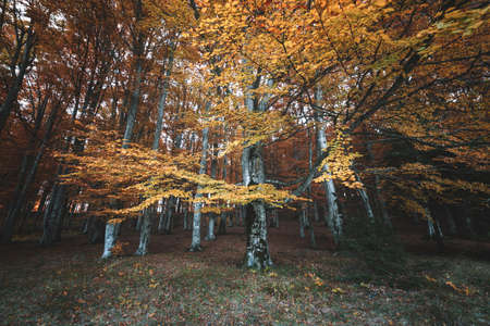 Autumn landscape of the beautiful, colorful forest 写真素材