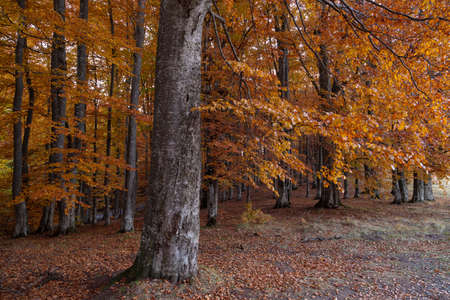 Autumn landscape of the beautiful, colorful forest Stockfoto