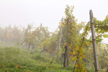 Autumn landscape of beautiful vineyards, near Maribor, Slovenia Stockfoto