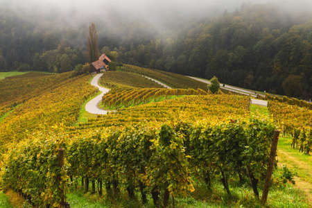 Autumn landscape of famous Slovenian and Austrian heart shape wine road among vineyards in Slovenia, near Maribor
