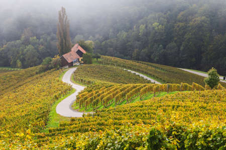 Autumn landscape of famous Slovenian and Austrian heart shape wine road among vineyards in Slovenia, near Maribor Imagens - 133808887