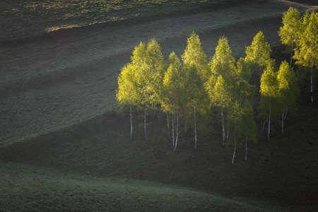 Landscape of forest at sunrise 版權商用圖片