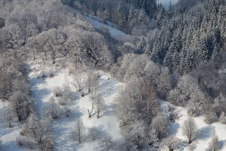 Winter landscape of the frosty forest in the Carpathian Mountains