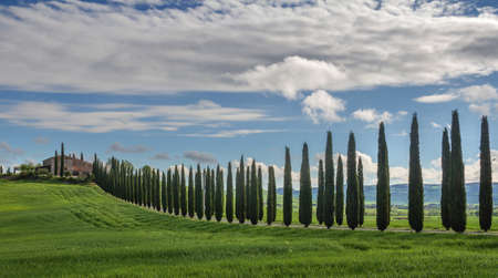 san quirico: The Alley Of Cypresses Stock Photo