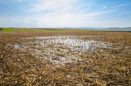 heavy rain: Flooded farm land corn field with remains after harvesting due to heavy rain causing a puddle and wet land on a sunny spring day with a blue cloudy sky