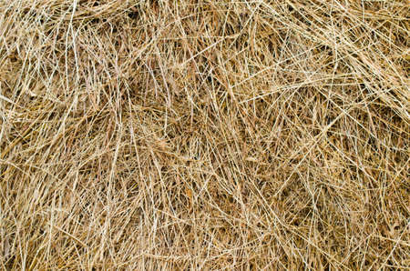 dried up: Hay stack texture in a close view with a yellow dried up look