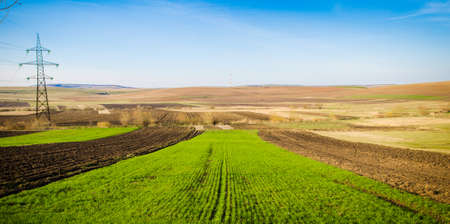 Brand new wheat field during a spring day with a fresh green look and farmland on the background with an arid dry look Stock Photo