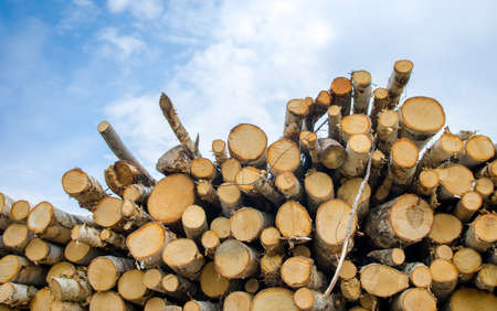 imposing: Pile of chopped wood logs with a blue cloudy sky in an imposing and imortant look