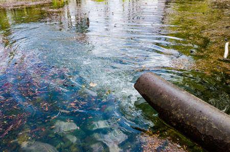 contaminacion del agua: Un tubo oxidado vertiendo agua dulce o líquido residual tóxico en un lago contaminado o río con hojas de naranja y una mirada chispeante azul