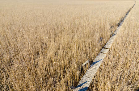 road and path through: Wood suspended path passing through a dry reed field reservation in a straight diagonal line twards the upper right corner with a wishfull melancholic look suggesting the road to the future