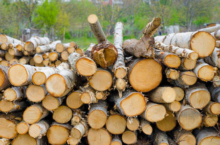 suggesting: Chopped trees in a stack suggesting deforestation and environmental damage for construction material
