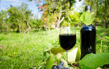 some: Red wine glass and bottle in a garden with some vine and grapes on a sunny day Stock Photo