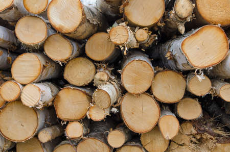 Chopped wood in a stack with detail of the round cut Stock Photo
