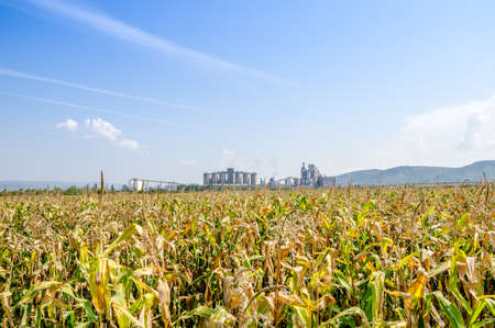Industrial factory in the middle of agricultural farmlands with corn in front