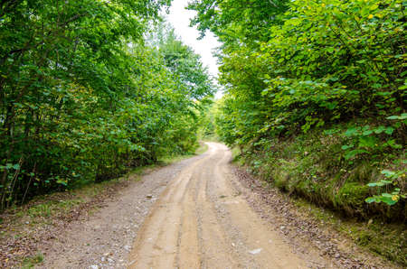 Rural countryside unpaved road passing through a beautiful green forest in Transylvania region of Romania