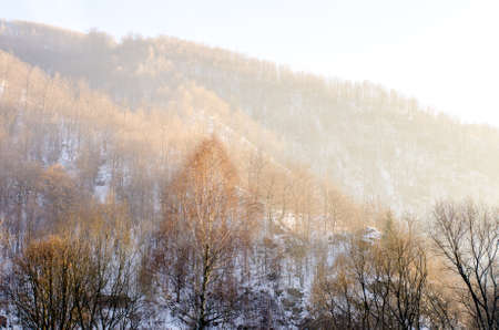 Forest on the mountain during a sunny cold winter day with snow and leafless trees and bright warm light Standard-Bild