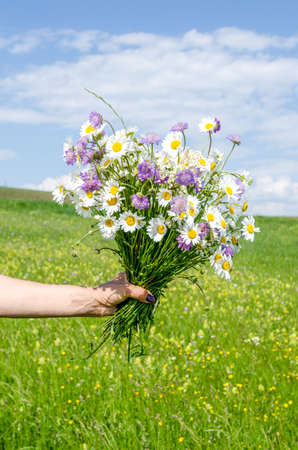 Lovely wild flowers bouquet in a woman's hand on a pasture with a fresh green background