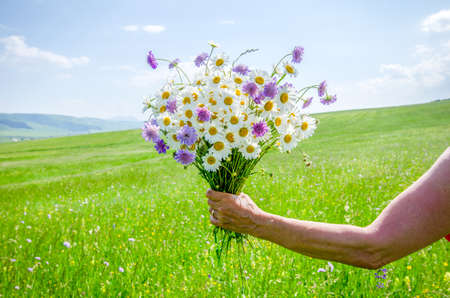 Woman holding a beautiful summer bouquet with wild flowers on a bright warm green field background