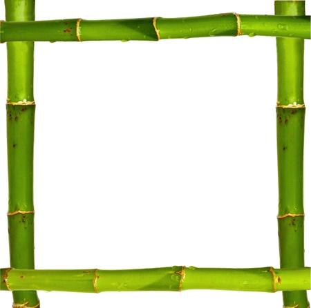 japones bambu: Marco de bamb� de tallos aislados sobre fondo blanco  Foto de archivo