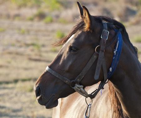 Profile of horses face  photo