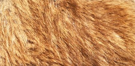 Red fox fur macro shot photo