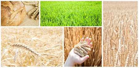 Collage made of various agricultural photographs photo