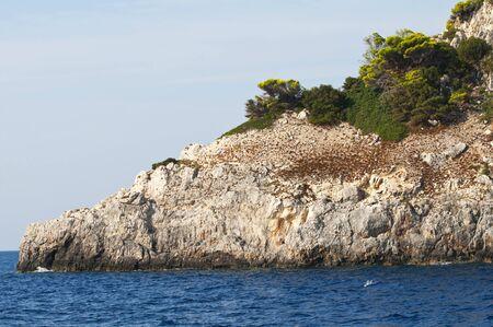 Zakynthos island - Greece  photo