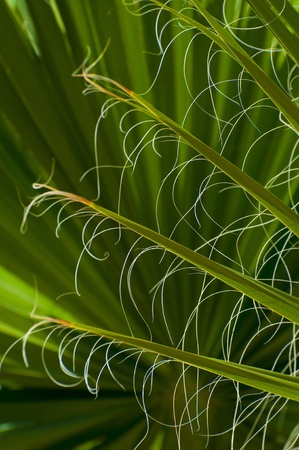 Abstract image of green palm tree leaves background  photo