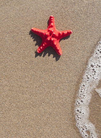 Starfish and wave on sand beach - Summer concept photo