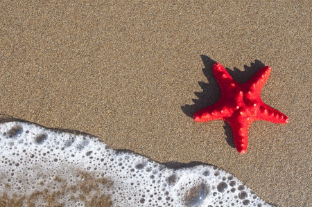 Red starfish on sandy beach photo