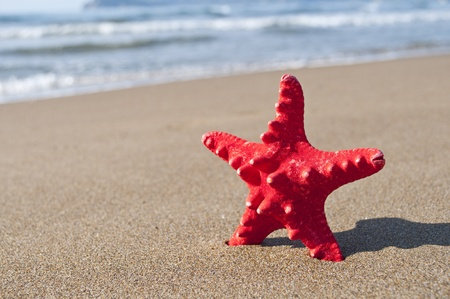 Red starfish on beach - Holiday concept  photo