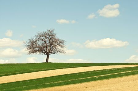 Single lonely tree on green field over blue sky  photo