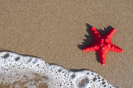 Red starfish on sandy beach photo