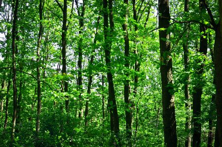 Green forest background photo