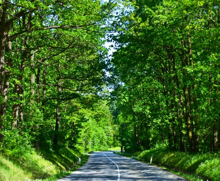 Landscape with road and green forest photo