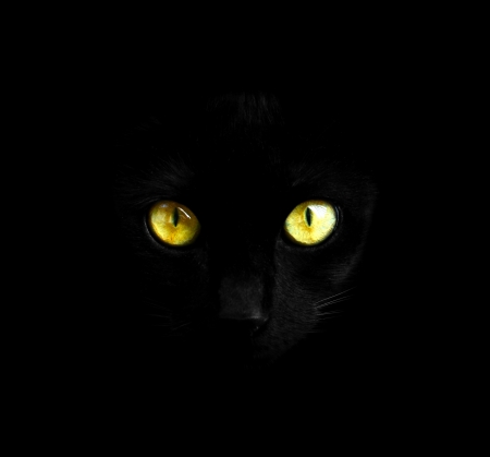 Black cat in dark close-up photo