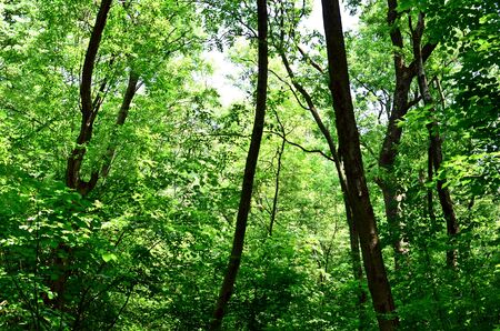 Beautiful green forest background photo