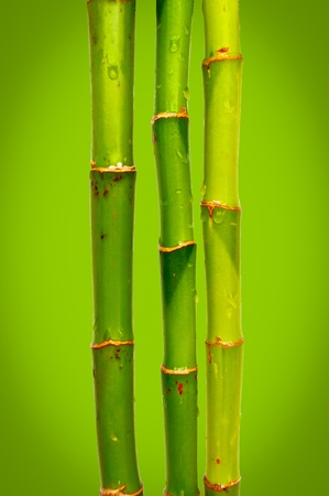 Bamboo against green bokeh background  photo