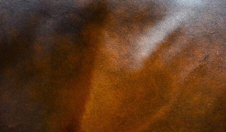 Horse fur background photo