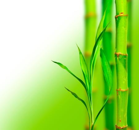 Beautiful bamboo background Stock Photo - 15320085