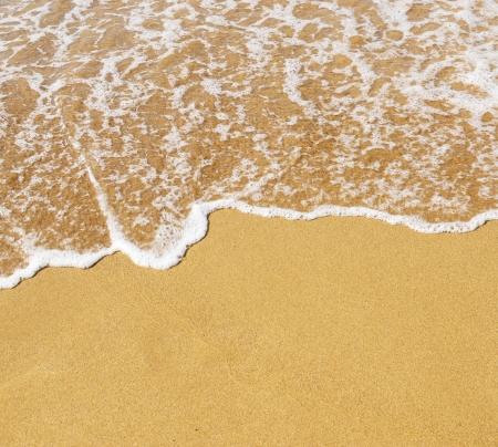 shoreline: Sand beach and wave
