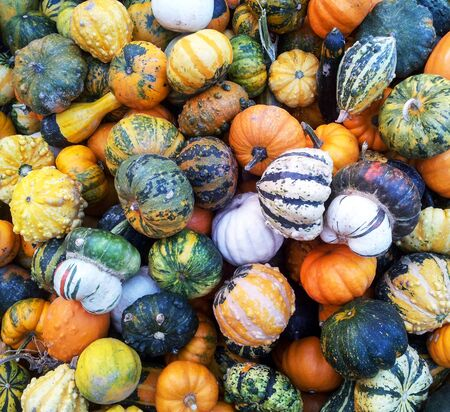 Decorative autumnal pumpkins background photo
