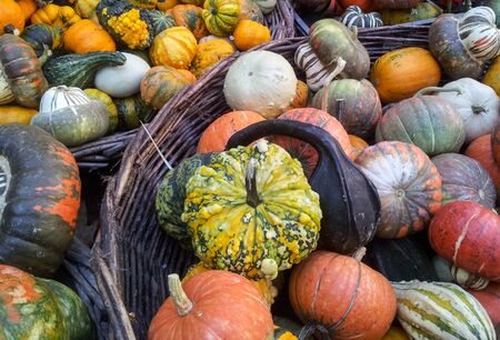Autumn colorful pumpkins background photo