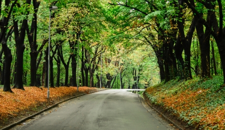 Autumn road photo