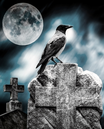 Crow sitting on a gravestone in moonlight at cemetery photo