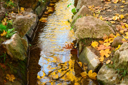 Autumn creek woods with yellow leaves foliage and rocks photo