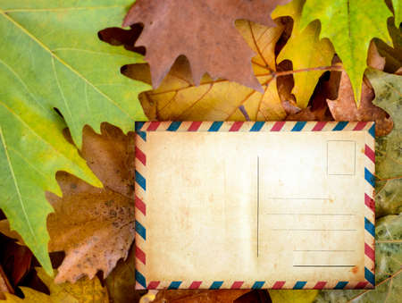 Blank postcard on autumn leaves photo