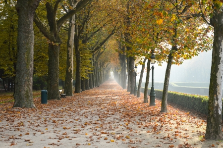 Autumn park in Dusseldorf Germany photo