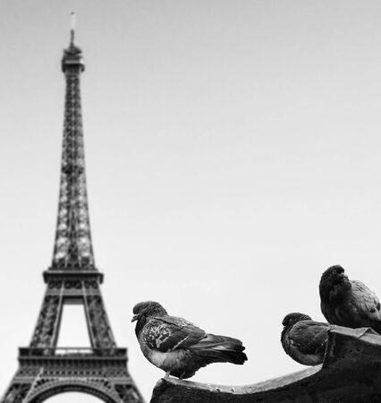 Pigeons against Eiffel tower - Paris France photo