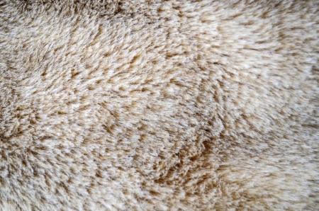 fuzz: Wolf fur texture